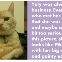 Goodbye Our Cat: A Few Words About Yuly