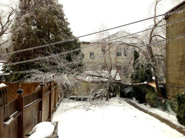 fallen tree ice storm toronto ourtorontolife
